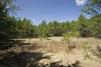 10 Acres Of Land Near Quincy Bluff!