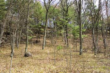 Cheap Land For Sale In Pine Grove Township, Portage County, WI!