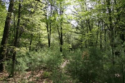 Central Wisconsin Vacant Land With Well & Septic!
