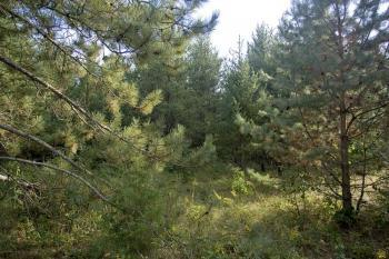 Heavily Wooded Land For Sale!