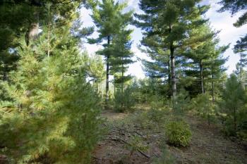 Camp Or Build On Almost 7 Acres Of Vacant Land!