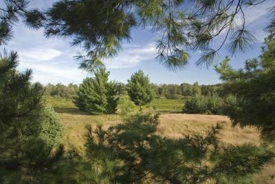 Prime Wooded Lot For Sale Abutting Public Land