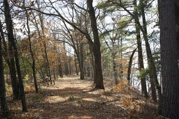 Mostly Wooded Vacant Parcel For Sale!