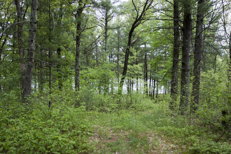 Wooded Lakeside Acreage In Central Wisconsin!