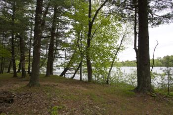 1.5 Wooded Acres W/ Protective Covenants!
