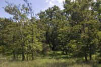 Central Wisconsin Land For Sale Near Lake
