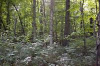 Heavily Wooded Pine & Oak Forest Filled With Wildlife