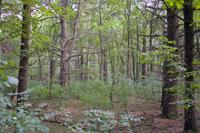 3 Wooded Acres In Heart Of Adams County