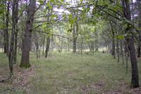 Wildlife Paradise Near Wisconsin Dells