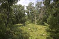 fully wooded land with deeded access