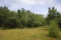 Mostly Wooded Vacant Land With Lake Access!