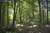 Buildable Wooded Lot With Deeded Creek Access