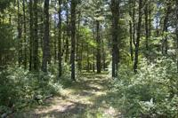Crystal Brook Woods Buildable Lot For Sale