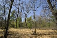 Cheap Vacant Land W/ Deeded Lake Access