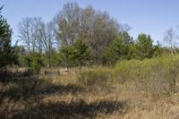 8 wooded acres located near public land