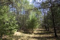 5 Acre Wooded Corner Lot For Sale
