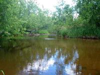 Beautiful Vacant Lot For Sale With Deeded Creek Access!