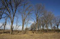 Over an acre of fully wooded land for sale near Wisconsin River!