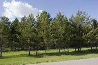 4 Wooded Acres  For Sale In Adams County, Central Wisconsin!