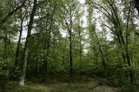 1656789 - Central Wisconsin Land For Sale on Buckner Creek!