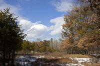 120 Acres of Mostly Wooded Hunting Land For Sale!